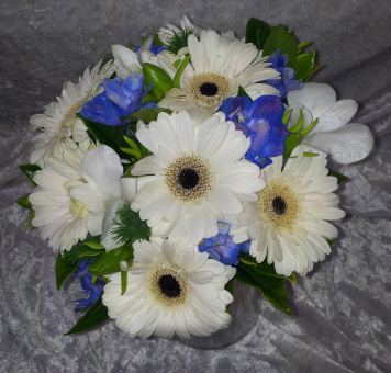 Posy of White Mini Gerberas with Blue Delphinium
