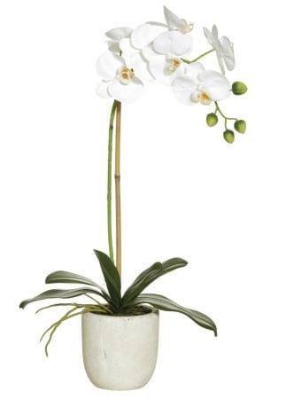 Orchid flowering in a ceramic pot
