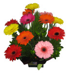 Gerbera Arrangement in a glossy Box