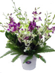 Mixed Coloured Orchid Arrangement in a Ceramic Pot